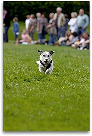 Calvendo Premium Lienzo de 60 cm x 90 cm de alto, pequeño perro en una gallina de perro, imagen sobre bastidor, imagen lista en lienzo auténtico, impresión en lienzo, animales