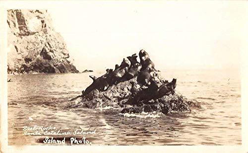Santa Catalina Island California Seal Rocks Real Photo Vintage Postcard J2531312 ()