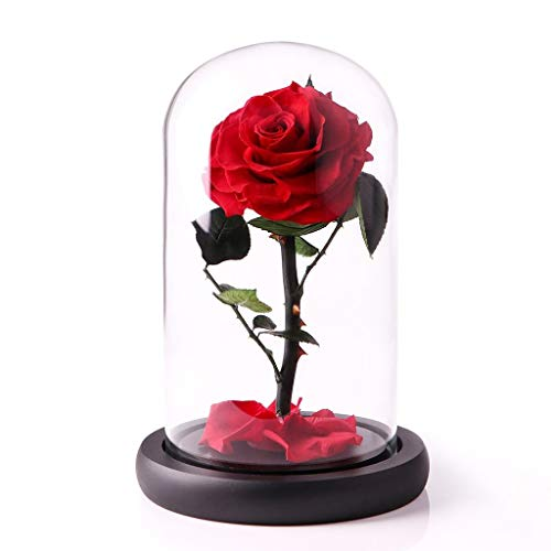 Preserved Fresh Flower,Enchanted Rose,Natural Eternal Life Rose in Glass Dome Cover with Gift Box for Valentine's Day, Mother's Day, Anniversary, Birthday, wedding (red)