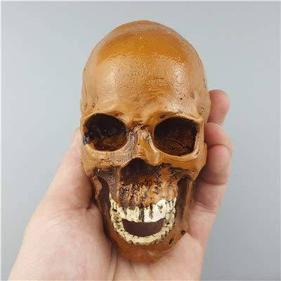 SaveStore Human Skull Resin Sculptures Replica Medical Model