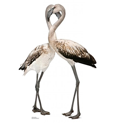 Flamingos - Love Birds - Advanced Graphics Life Size Cardboard - Cut Out Flamingo