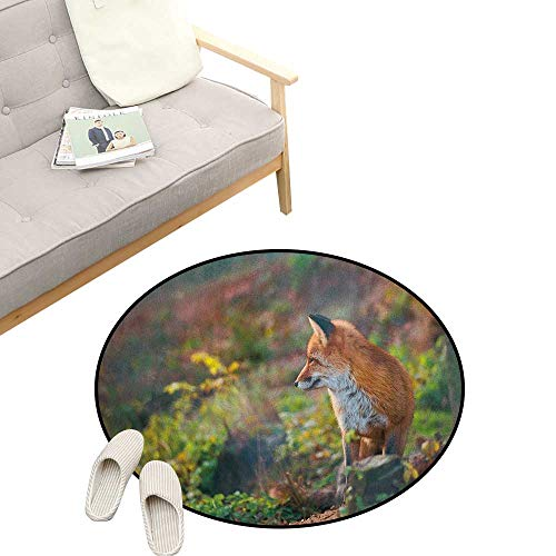 (Fox Round Rug Living RoomArt Deco ,Young Red Fox Listening to Something in Woodland Forest Wildlife Predator, Playroom Super Soft Carpet Floor Mat 23