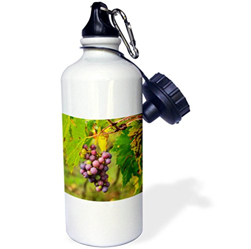 3dRose Danita Delimont - Vineyards - Italy, Tuscany, Chianti, Autumn, Harvest Grapes waiting to be picked - 21 oz Sports Water Bottle (wb_277685_1) by 3dRose