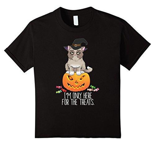 Grumpy Cat Costume Amazon (Kids Cat on Pumpkin T shirt - Funny Halloween Costume 12 Black)