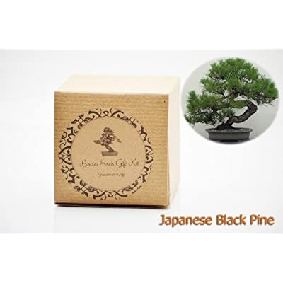 9GreenBox - Japanese Black Pine Bonsai Seed Kit- Gift - Complete Kit to Grow Dwan Red Wood Bonsai from Seed : Live Indoor Bonsai Plants : Grocery & Gourmet Food
