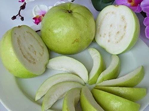 Sweet Guava 20 Seed Thai Tropical Fruit Fresh & viable Seed psidium guajava d99