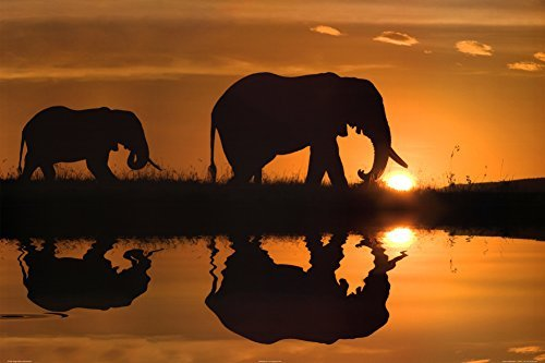 Buyartforless (24x36) Jim Zuckerman African Silhouette Elephants Art Print Poster