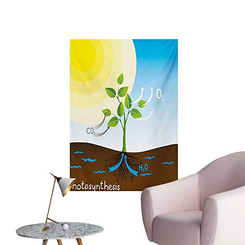 Anzhutwelve Educational Wallpaper Simple Photosynthesis Scheme Plant Sun Molecules Chemical Chain Growth EcologyMulticolor W24 xL36 Space Poster