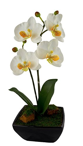"Red Vanilla OF464-100 Phalaenopsis White Centerpiece with Black Base, 17.25"" x 8.75"","