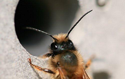 Nido de ladrillos Bee Hotel abejas Colmena Casa 21,5 cm x 10,5 cm ...
