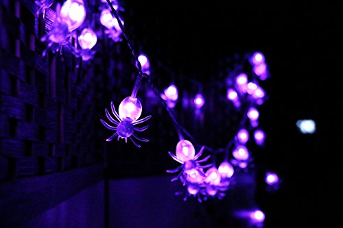 Nite Light Gardens