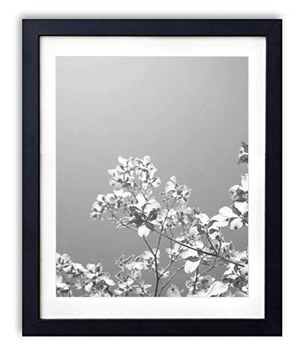 (SHADENOV Black Wood Framed Wall Art - Dogwood Flowering Branches Green Sky - Art Print Pictures For Wall Decoration 16x24 Inches (Black and White))