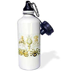 3dRose wb_80725_1 Picture Of 1800 Drawing Of Famous Biologist Squids Sports Water Bottle, 21 oz, White