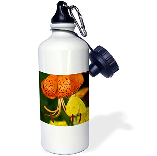 3dRose Danita Delimont - Butterfly - Sulphur Butterfly in the Phoebis family 01 - 21 oz Sports Water Bottle (wb_249851_1) -