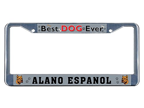 Sign Destination Metal Insert License Plate Frame Alano Espanol Dog Best Ever Weatherproof Car Accessories Chrome 2 Holes Solid Insert Set of 2 1