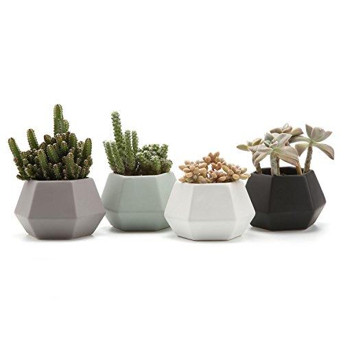 T4U Ceramic Hexagonal Pattern Semi-Luster Surface succulent Plant Pot/Cactus Plant Pot Flower Pot/Container/Planter Full colors Package 1 Pack of 4