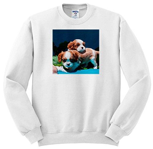 3dRose Danita Delimont - Puppies - Two Cavalier King Charles Spaniel Puppies, Mr - Sweatshirts - Youth Sweatshirt Med(10-12) ()
