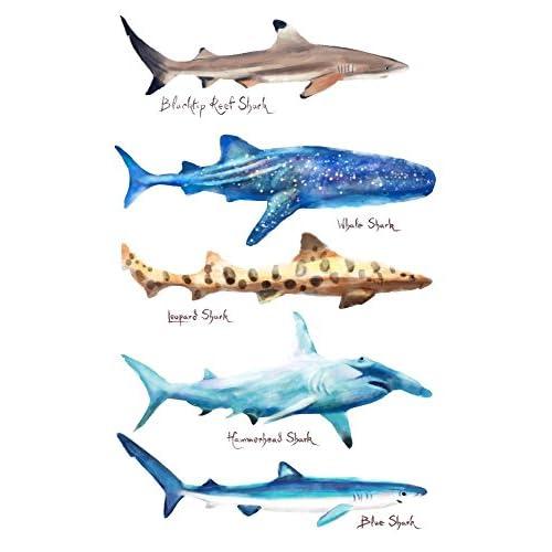 Shark Names - Watercolor (8oz Whole Bean Small Batch Artisan Coffee - Bold & Strong Medium Dark Roast w/ Artwork)