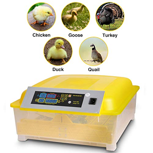 Sailnovo Egg Incubator Digital Automatic Incubators for Chicken Duck Goose Quail Turkey Tuttle Birds Fertilized Eggs,Poultry Hatcher Eggs Incubation Tunner (48 Egg Incubator) by Sailnovo
