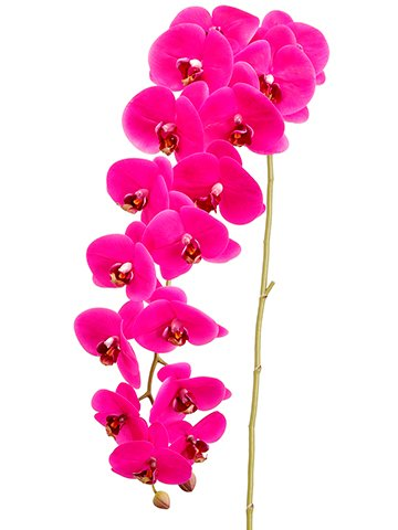 Phalaenopsis Spray (Arcadia Silk Plantation 45