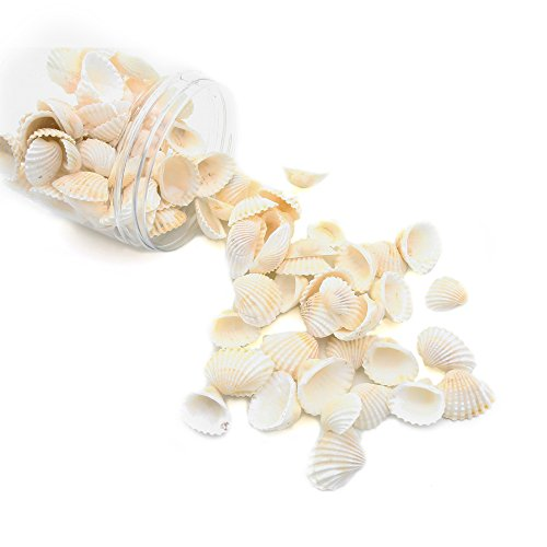 lls, 8.8oz White Scallop Sea Shells 3/4