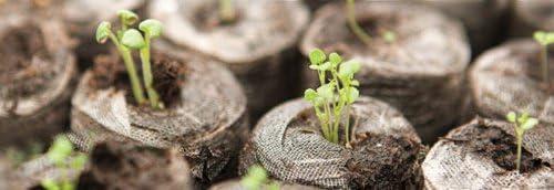Jiffy  Lot de 100 paquets de 7/Granul/és de tourbe fertilisants pour graines 24/mm