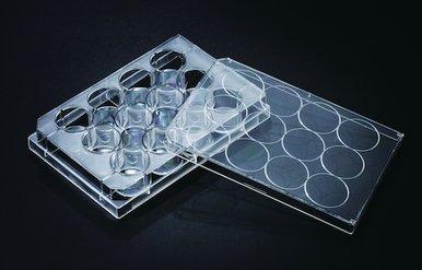 Stellar Scientific 12-Well Tissue Culture Treated Plates, 50/Cs