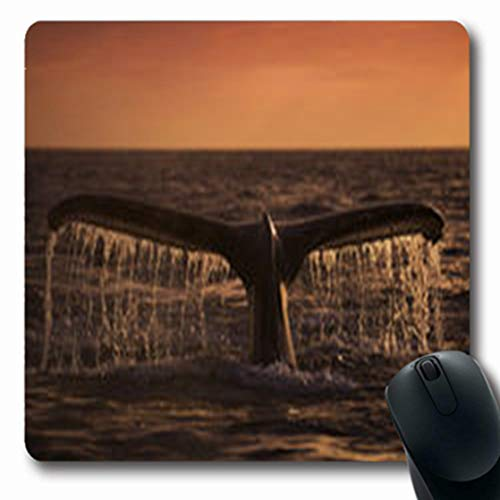 Pandarllin Mousepads Bay Humpback Whale Dives Into Sunrise Waters Monterey Wildlife Nature Coastline Oblong Shape 7.9 x 9.5 Inches Oblong Gaming Mouse Pad Non-Slip Rubber Mat