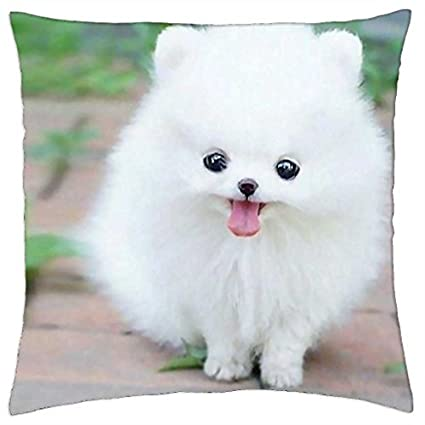 Amazoncom Teacup Pomeranian Puppy Maxie Throw Pillow Cover