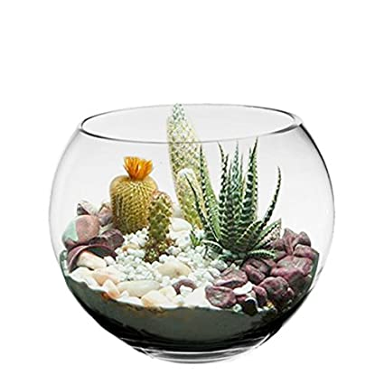 Decorative Fish Bowls Impressive Amazon CYS EXCEL 60 Tall Decorative Bowls Glass Bubble Bowl