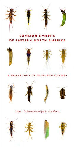 Amazon common nymphs of eastern north america a primer for common nymphs of eastern north america a primer for flyfishers and flytiers keystone books fandeluxe Images