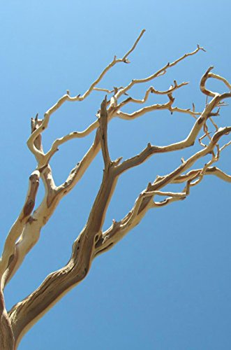 (Richland Manzanita Branches Sanded 21-38