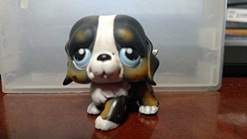 Bernese Mountain Dog #145 (St. Bernard Mold: Blue Eyes) Littlest Pet Shop (Retired) Collector Toy - LPS Collectible Replacement Single Figure - Loose (OOP Out of Package & Print)