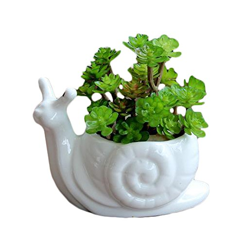 Snail Pot (Frideko 5.1 Inches White Ceramic Animal Shaped Succulents Pot / Cactus Pot / Moss Pot / Bonsai Pot with Drainage Hole ~ Adorable Gift (Snail) - Pack of 1 pc)