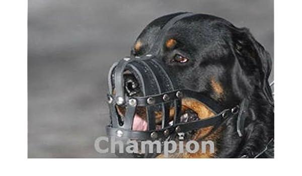 Champion Luz Piel Perro Bozal para Rottweiler, Mastiff y Otras ...