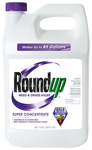 Roundup Weed and Grass Killer Super Concentrate, 1-Gallon (Best Grass Killer For Flower Beds)