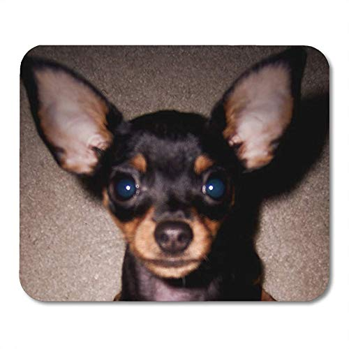 LIminglove Min Mini Pinscher Pin Doberman Toy DogGaming Mouse Pad,Non-Slip and Dust-Proof Mouse,Funny Creative Mouse pad