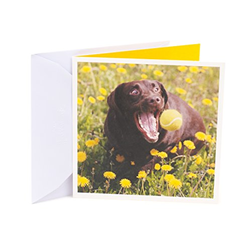 Hallmark Studio Ink Birthday Greeting Card (Perfect Moments)