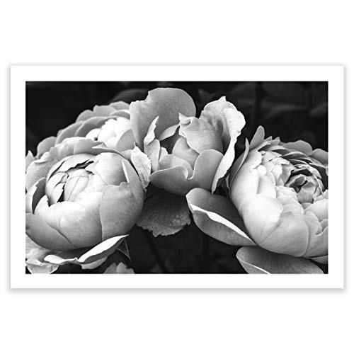 Humble Chic Wall Art Prints - Unframed HD Printed Modern Picture Poster Decorations for Home Decor Living Dining Bedroom Kitchen Bathroom Office Dorm Room - Black & White Peonies BW, 24x36 Horizontal from Humble Chic NY
