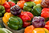 Rainbow Bell Pepper Mix 640 Seeds Purple Red Yellow Green Colors #37