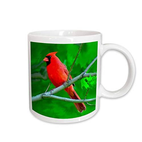 3dRose Red Cardinal Mug, 11-Ounce (Cardinal Pic)