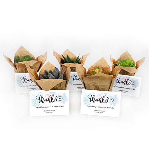 NW Wholesaler - Bulk Succulents with Craft Paper, Burlap String, and Personal Cards for Wedding or Party Favors (30)]()