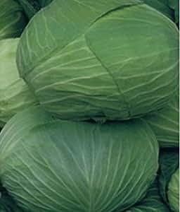 Seeds Cabbage Braunshveygskaya Organic Russian Heirloom White Variety