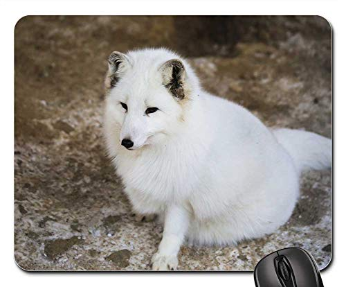 Mouse Pads - Fauna White Fox Lapland Animal White Snow Steppes ()