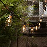 25 Pack - Clear ST35 Bulbs for Patio String Lights