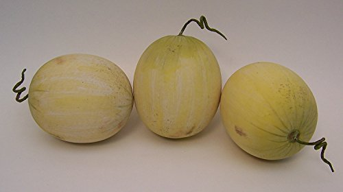 Designer One Artificial Faux Fake Honeydew Melon Fruit by Realistic Fruit