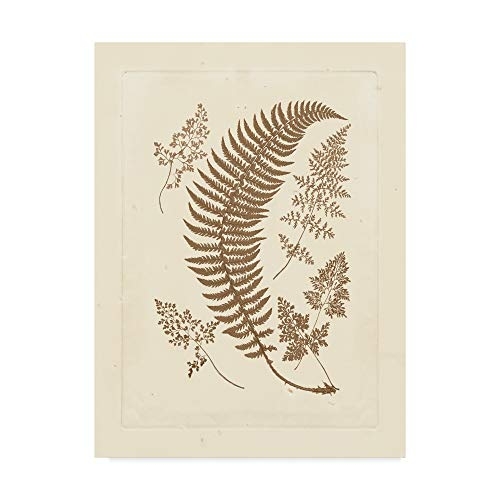 Trademark Fine Art Sepia Ferns IV by Vision Studio, 18x24-Inch 18x24