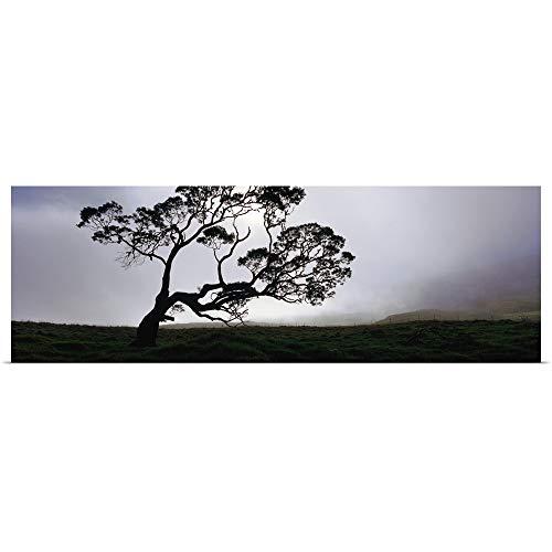 GREATBIGCANVAS Poster Print Entitled Silhouette of a Koa Tree, Mauna Kea, Kamuela, Big Island, Hawaii by 36