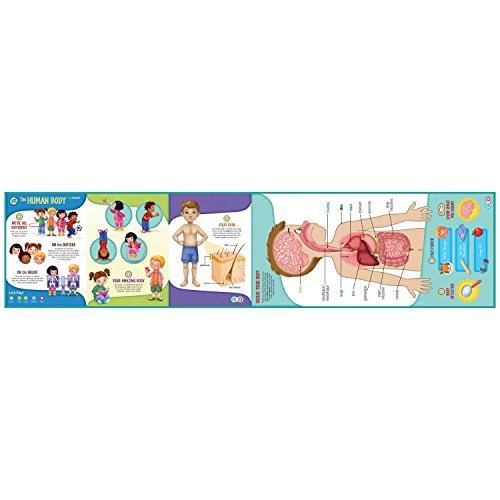 LeapFrog LeapReader Interactive Human Body Discovery Set (works with Tag) by LeapFrog (Image #7)