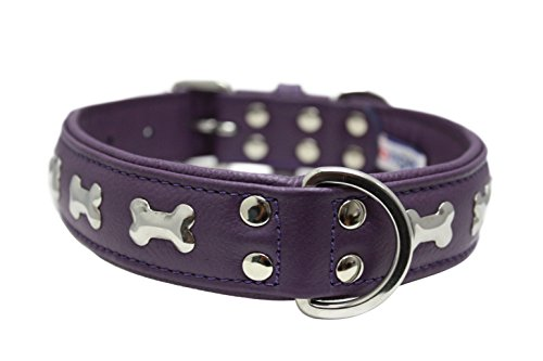 "Leather ""Bones"" Dog Collar, Padded, Double-Ply, Riveted Settings, 26"" x 1.25"", Purple, Leather (Rotterdam Bones) Neck Size: 20"" - 24"""